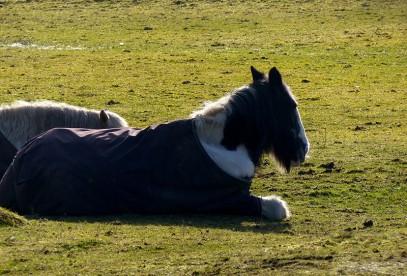 Lazy horses