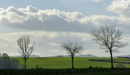 Three trees and two hills