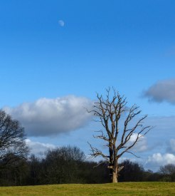 Moon and dead tree