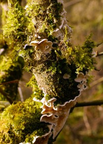 Green moss, white lichen