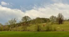 Willey landscape