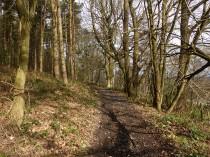 Ned's Lane