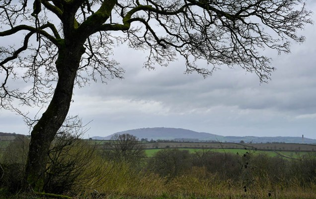 Wrekin (and the 'lichen and moss' tree)