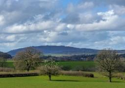 Dead tree and the Wrekin