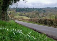 Britons Lane and Shirlett