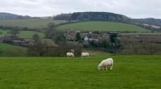 Sheep and Dean Farm