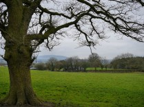 A grey view to Brown Clee