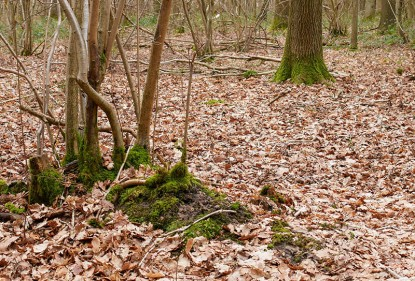 Leafy woodland floor