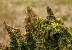 Rotting post with moss