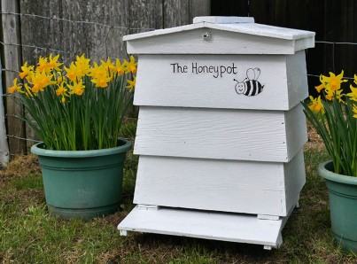 ...The Honeypot!