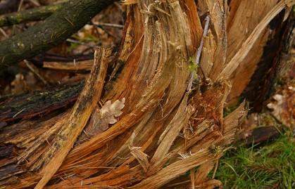 Splintered oak