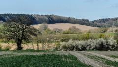 A Shirlett view