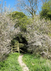Blackthorn archway