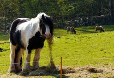 Good hay, this!