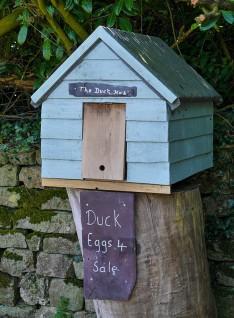 Duck hut