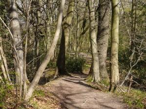 Along Benthall Edge