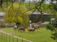 Severn Hall horses