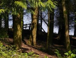 A way through the trees