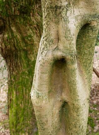 Strange holly trunk