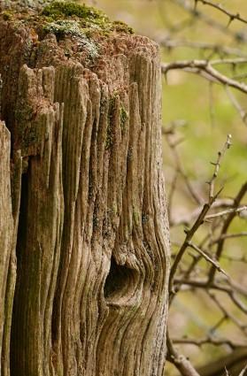 Well-seasoned wood