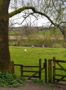 Riverside grazing