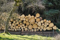 Tree fellers have been busy