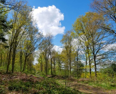 Woods in May