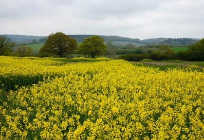 Yellow view to Shirlett
