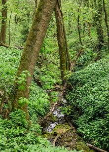 The dingle brook