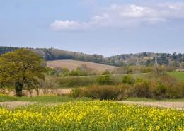 Shirlett view