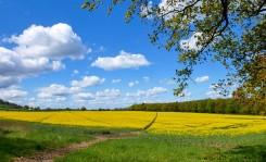 Fields in May