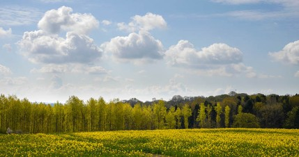 Spring greens and yellow