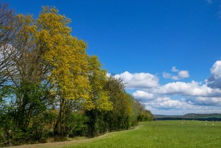 Trees in May