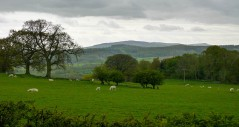 Clee view