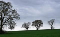 Trees on the ridge, Church Preen