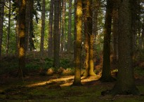 A little sunlight in the woods