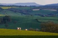 Hill, sheep