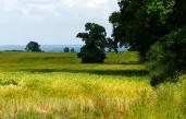 Sunshine on the barley