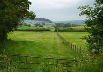 ... in the fields