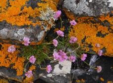Colour on the rocks