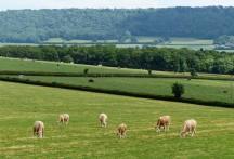Formation grazing team