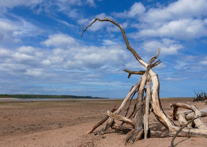Dead wood on the sands