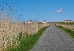 Roadside reeds