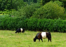 The Round Hill belties