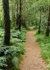 Pine-needled path