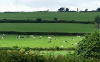 Sunshine on the herd