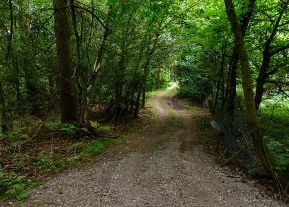 Dark in the woods