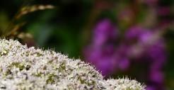 Hedgerow colours
