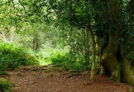 Ancient woodland along the ridge