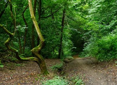 Dingle tree